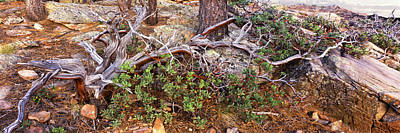 Coconino National Forest Photograph - Manzanita Clings To Life by Panoramic Images