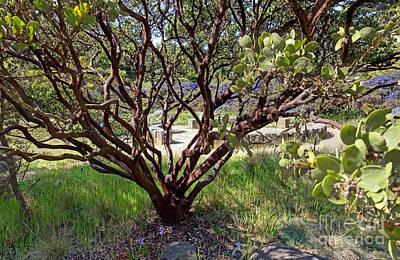 Photograph - Manzanita by Kate Brown