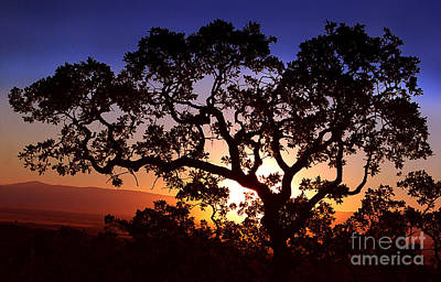 Photograph - Manzanita Sunset by Peter Piatt