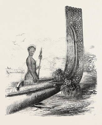 Outrigger Drawing - Maori Chief, And Carved Stern Of A New Zealand Canoe by New Zealand School