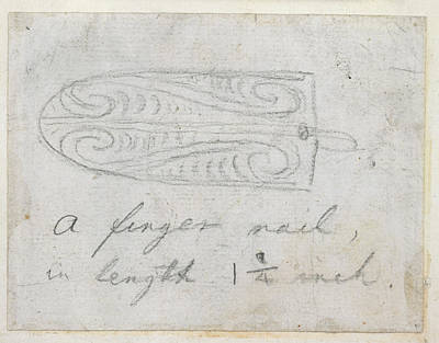 The Country Photograph - Maori Tattoo Design by British Library