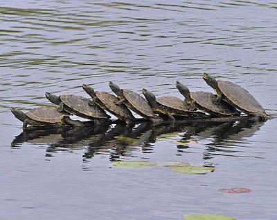 Map Turtles Art Print by Tony Beck