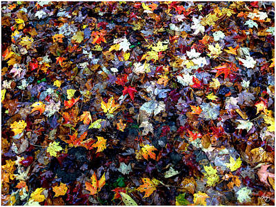 Photograph - Maple Chaos by Wayne King