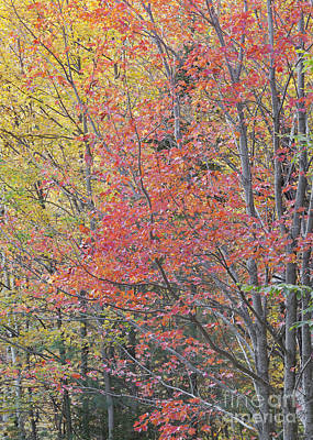 Photograph - Maple Corner Foliage by Alan L Graham