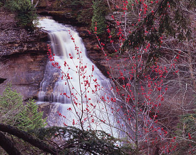 Photograph - Maple Flowers And Cascade by Tom Daniel