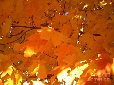 Photograph - Maple Gold by Jessi and James Gault