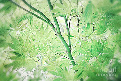 Photograph - Maple Green by Paul Cammarata