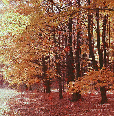 Photograph - Maple Grove by Vintage Photography