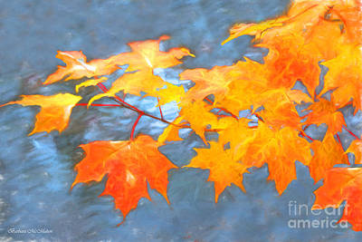 Photograph - Maple Impressions by Barbara McMahon