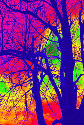 Photograph - Maple In Abstract I by Kathy Sampson