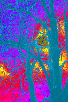 Photograph - Maple In Abstract II by Kathy Sampson