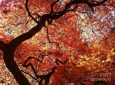Maple In Fall Art Print