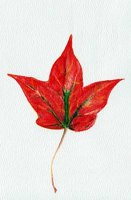Maple Leaf Art Print by Anastasiya Malakhova