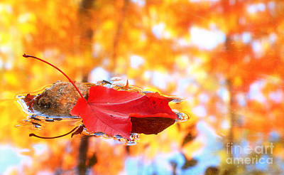 Photograph - Maple Leaf And Fall Color by Charline Xia