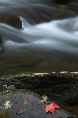Photograph - Maple Leaf by Byron Jorjorian