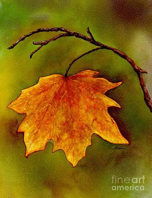 Maple Leaf In It's Yellow Splendor Art Print by Nan Wright