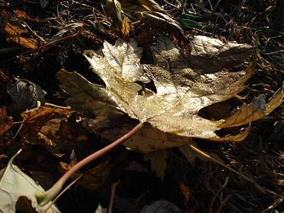 Art Print featuring the photograph Maple Leaf by J L Zarek