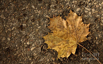 Maple Leaf On The Ground Art Print by Jolanta Meskauskiene