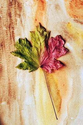 Colore Photograph - Maple Leaf On Water Color Background by Vishwanath Bhat