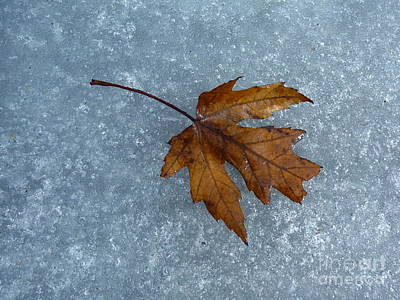 Photograph - Maple Leaf by Tim Good
