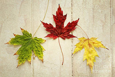 Maple Leave Art Print by Isabel Poulin
