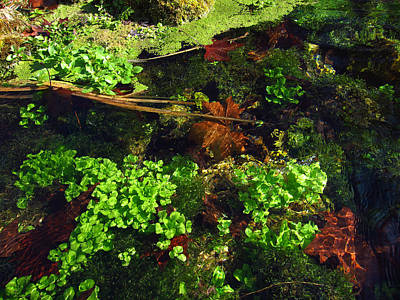Photograph - Maple Leaves And Watercress by Robin Street-Morris