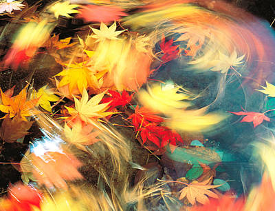 Impact Photograph - Maple Leaves, Blurred Motion by Panoramic Images