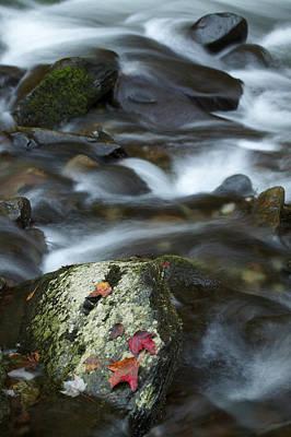 Photograph - Maple Leaves by Byron Jorjorian