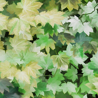 Photograph - Maple Leaves Green by Jennie Marie Schell