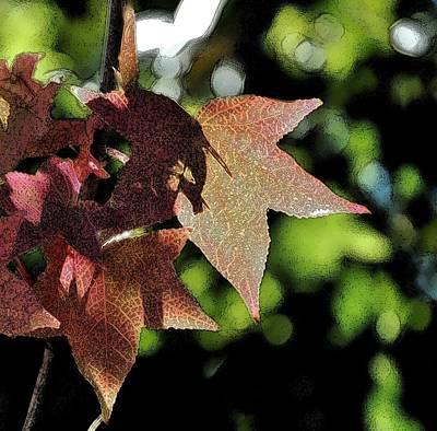 Maple Leaf Art Digital Art - Maple Leaves Ink Outline by Linda Brody