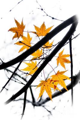 Maple Leaves Art Print by Jonathan Nguyen