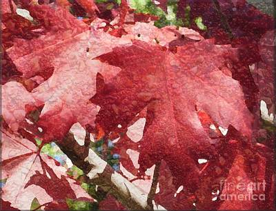 Photograph - Maple Leaves by Kathie Chicoine