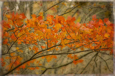 Photograph - Maple Leaves by Mikael Carstanjen