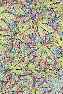 Photograph - Maple Leaves No.1 by Tony Mills