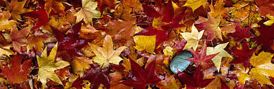 Fallen Leaf Photograph - Maple Leaves by Panoramic Images