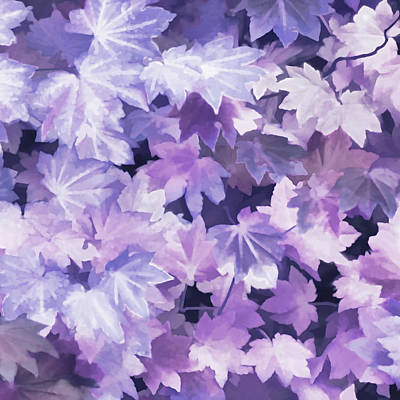 Photograph - Maple Leaves Purple Abstract by Jennie Marie Schell