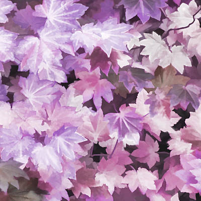 Photograph - Maple Leaves Violet Abstract by Jennie Marie Schell
