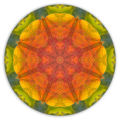 Photograph - Maple Mandala 2 by Beth Sawickie