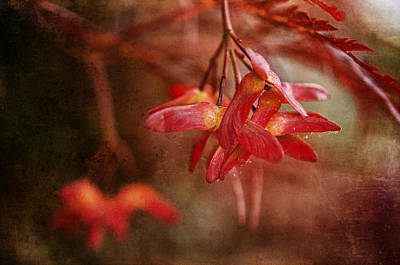 Photograph - Maple Ornaments by Terry Rowe