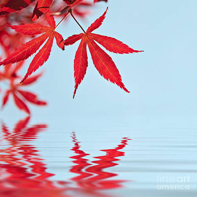 Red Leaves Photograph - Maple Reflection by Delphimages Photo Creations