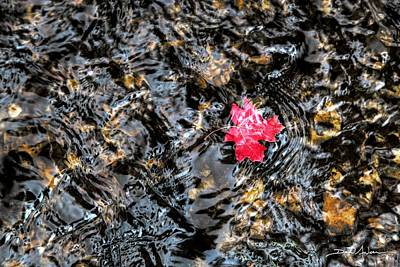 Photograph - Maple Ripples by David Andersen
