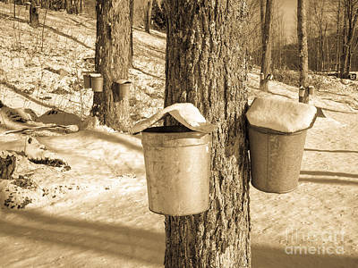 Metal Tree Photograph - Maple Sap Buckets by Edward Fielding