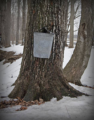 Photograph - Maple Sugaring by John Stephens