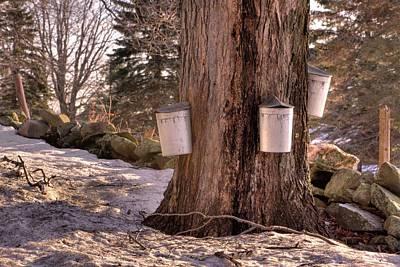 Maple Syrup Buckets Art Print