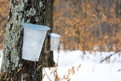 Sugaring Season Photograph - Maple Syrup Time by Cheryl Baxter