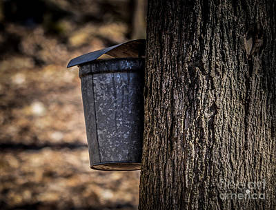 Photograph - Maple Syrup Time Collecting Sap by Ronald Grogan