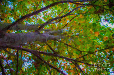 Photograph - Maple Tree by Dale Powell