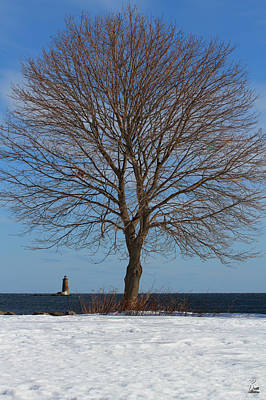 No People Photograph - Maple Tree With Whaleback Lighthouse by Brett Pelletier