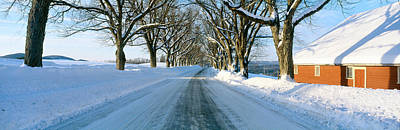 Winter Landscapes Photograph - Maple Trees In Snow, Lyndonville by Panoramic Images