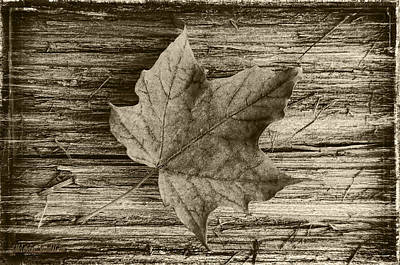 State Photograph - Maple Wood by LeeAnn McLaneGoetz McLaneGoetzStudioLLCcom